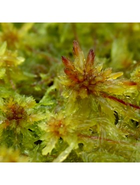 LeftBannerSphagnum1