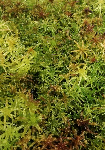 Sphagnum mixed portion