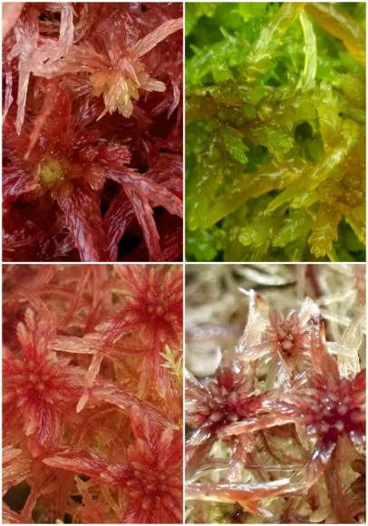 Red Species Selection