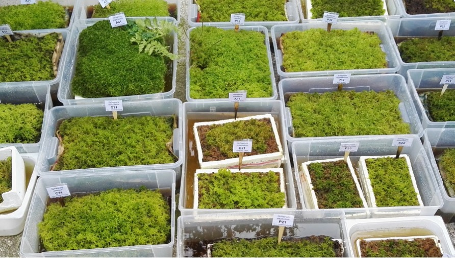 How to grow Sphagnum